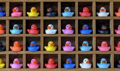 Ducks 20 crop.jpg
